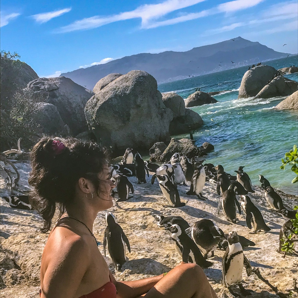 A girl in a red bikini sits on a rock, surrounded by African Penguins. It is sunny and there is a blue sky.